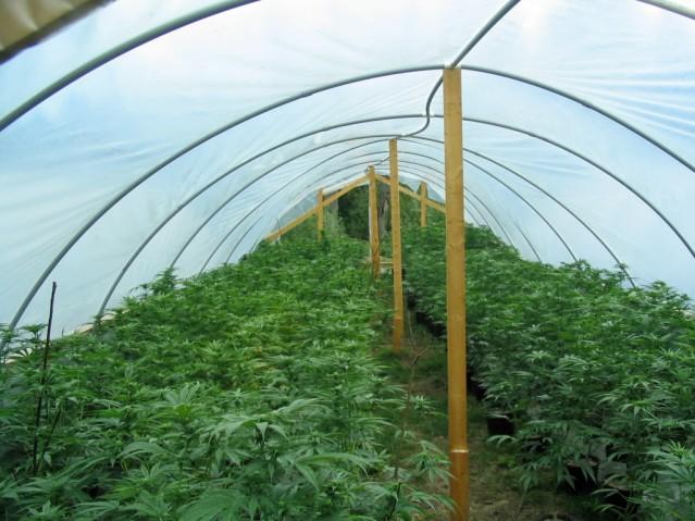 opinions-kaetlyn-dembkoski-marijuana-spiritual-englightenment-marijuana-greenhouse-4-9-11-flickr